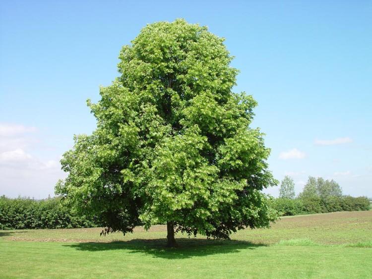Bomenwijzer for Foto di alberi da colorare